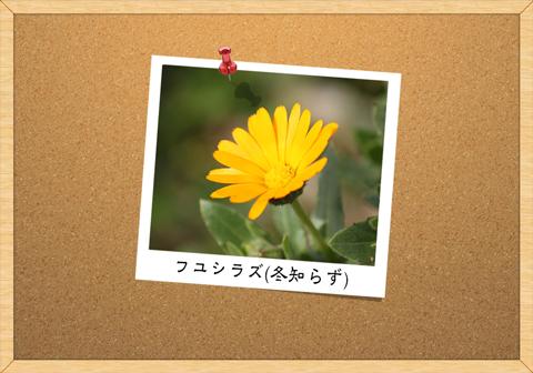 ニョセン(女仙)
